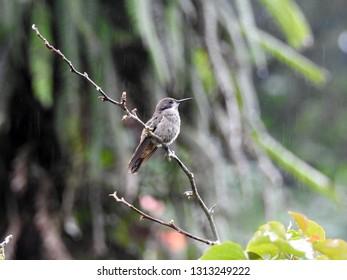 Bird is sitting on a branch. Costa Rica
