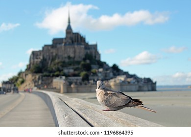 bird sitting on the bridge to Mont Saint-Michel