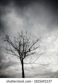 bird sitting on a dried tree autumn start