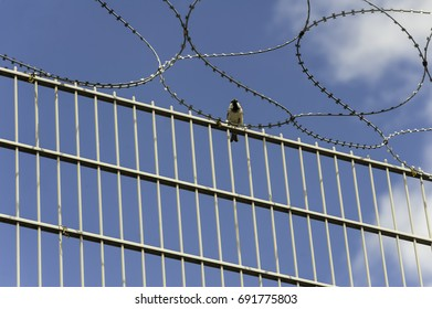 Bird sitting on a fence with barbed wire