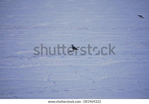 Bird sitting on a frozen lake