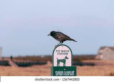 "A bird sitting on a sign that says ""Pet waste station please clean up after your pet"" - abstract photography"