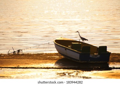 Bird sitting on a small boat in Knysna Lagoon, South Africa