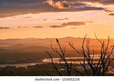 Bird sitting in a tree above Canberra, Australia.
