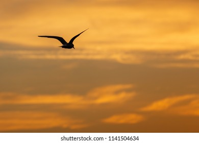 Bird and sky