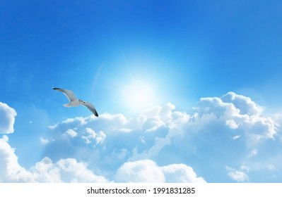 Bird soaring high above the clouds in a heavenly sky