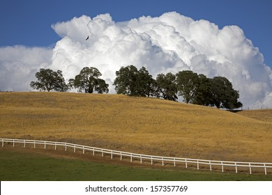 A bird soars high over a country scene with cumulus clouds in the background