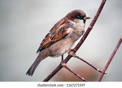Bird of a sparrow on an autumn branch