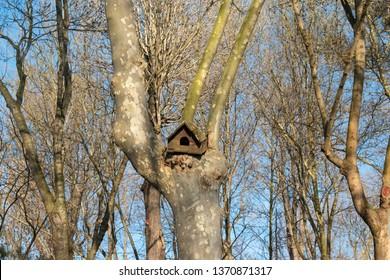 bird or squirrel nest. bird or squirrel nest. squirrel and birdhouse on tree. squirrel and bird nest on the tree