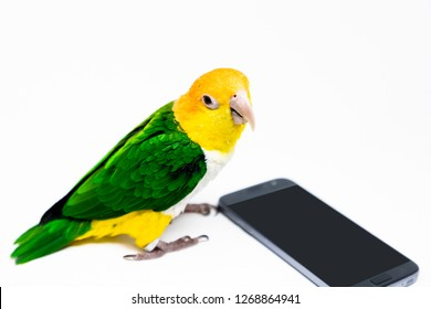 A bird is standing front of a gray cellphone