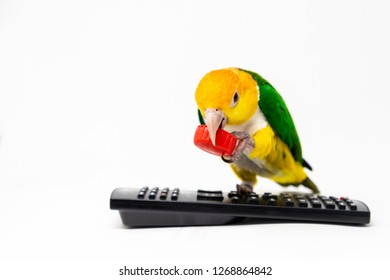 A bird is standing on a remote control holding a red bottle cup