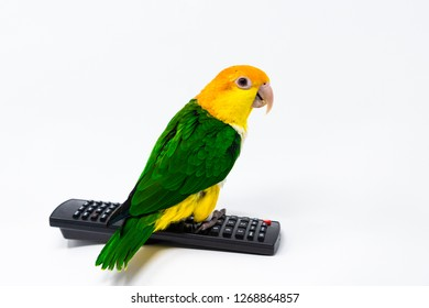 A bird is standing on a remote control