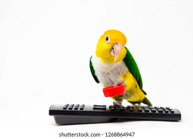 A bird is standing on a remote control holding a red bottle cup with his leg