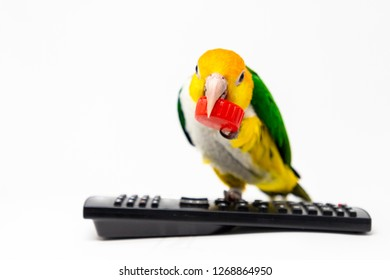 A bird is standing on a remote control holding a red bottle cup with his beak