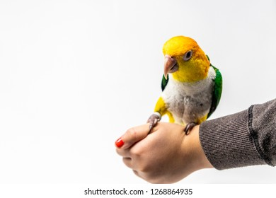 A bird is standing on a woman's hand