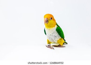 A bird is standing in a white background
