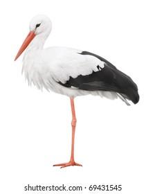 Bird stork isolated on white background