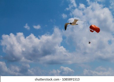 Bird in a summer sky and a parachute.