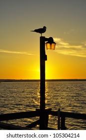 Bird and sunset