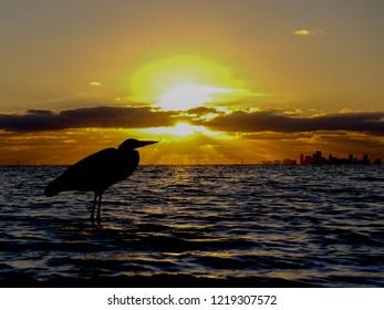 Bird in sunset at Tampa Florida