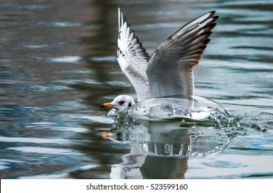 Bird takes-off from water