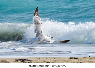 Bird taking flight on the beach