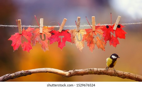 bird tit stands on a branch in the garden under a banner with the word autumn carved on red maple leaves on clothespins and rope on a Sunny day