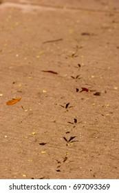 Bird Tracks in Concrete