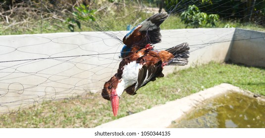 Bird is trapped on a net