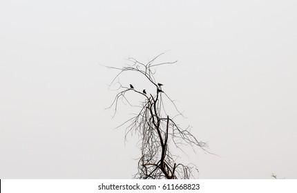 bird tree nutuers