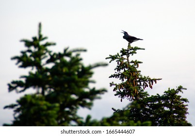 Bird trill at the top of the tree