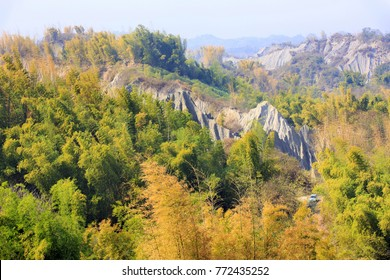 bird view of forest