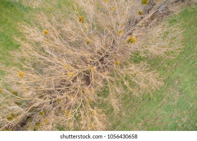 bird view of a tree with misletoe
