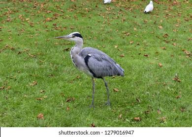 Bird in Vondelpark, Amsterdam Holland