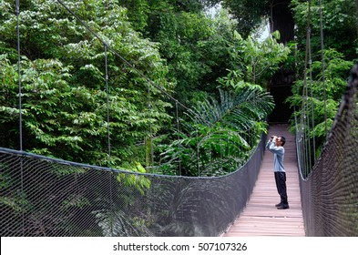 Bird watching in the jungle. One male bird watcher with binoculars stands on a wooden bridge. Copy space to the left.