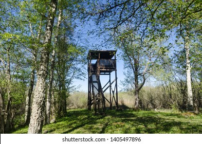 Bird watching tower in a beautiful deciduous forest by springtime at the swedish island Oland