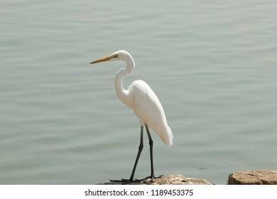 bird water wallpepar