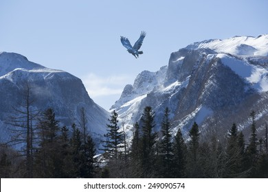 Bird wheeling above snow mountain range in winter