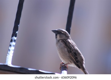 a bird which photografed in a balcony