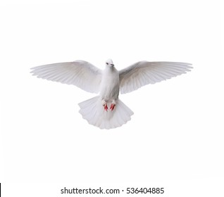 Bird White pigeons Flying