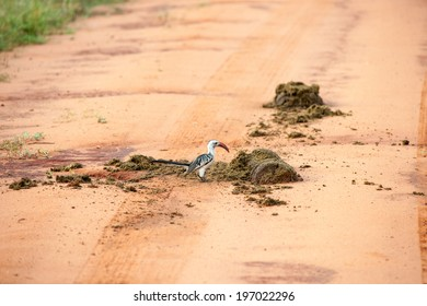bird in the wilds of africa
