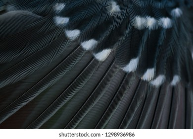 bird wing background, macro photo, abstract texture