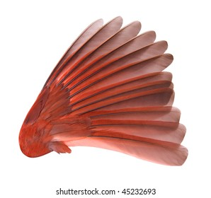 Bird Wing with clipping path.