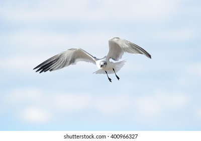 Bird wings is a detailed closed of a a beautiful seagull spreading its wings while in mid flight.