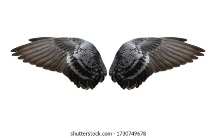 Bird wings isolated on white background