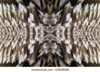 Bird wings pattern background texture made from eastern imperial eagle feathers.