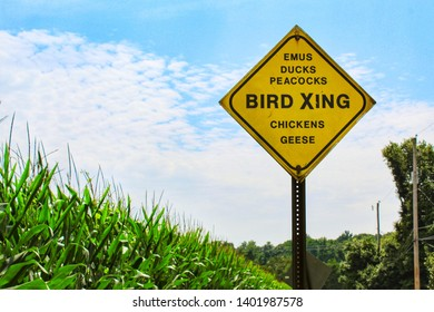 Bird Xing sign. A road sign near a field of corn that lists different kinds of birds for motorists to watch out for.