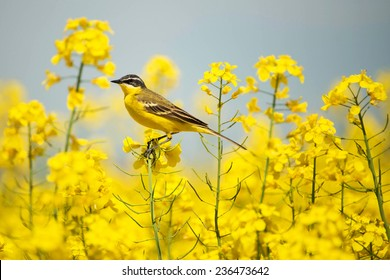 yellow bird images stock photos vectors shutterstock