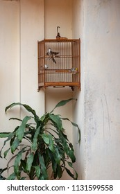 birdcage hanged on the wall