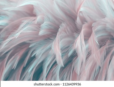 Bird,chickens feather texture for background Abstract,blur style and soft color of art design.